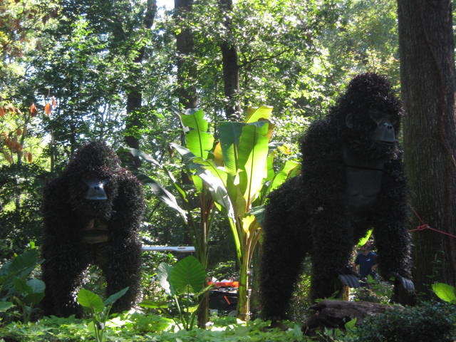 Gorillas in the garden