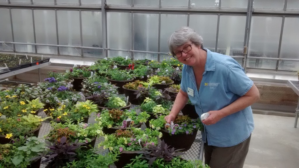 Adrienne O'Brien Collections and Natural Areas Specialist at Matthaei Botanical Gardens leads a team of University of Michigan student workers and adult volunteers. They plant, grow and design containers for the Plant Sale.