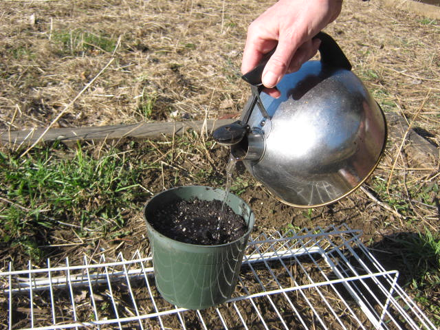 A six inch pot is a good size for less that thirty or so seeds.