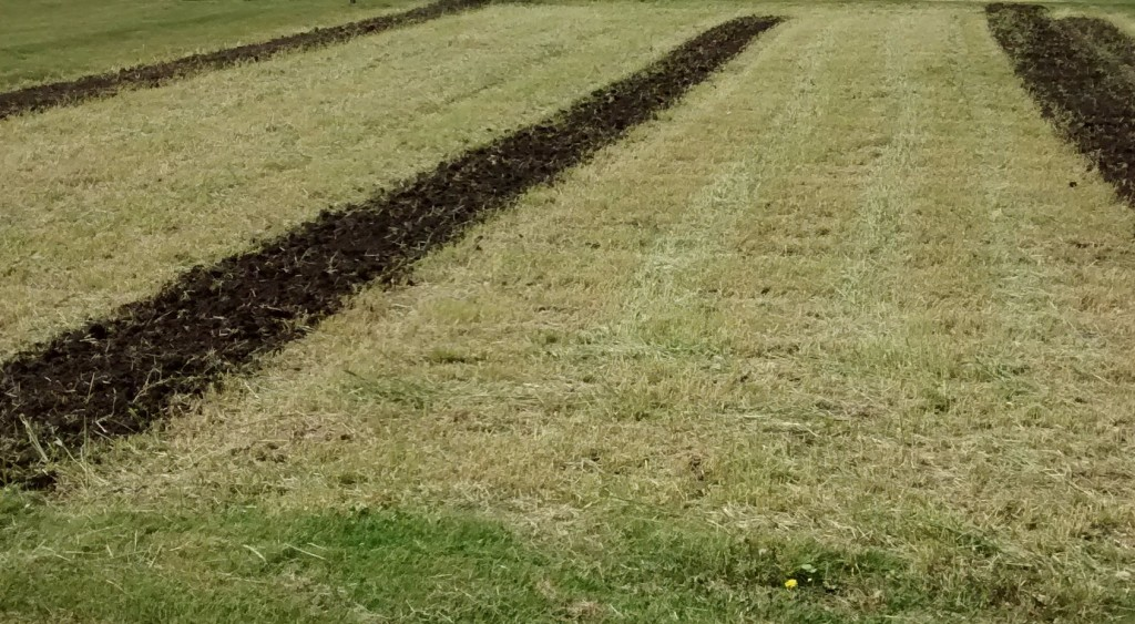 The winter rye residue was easily incorporated into the soil b y the rototiller