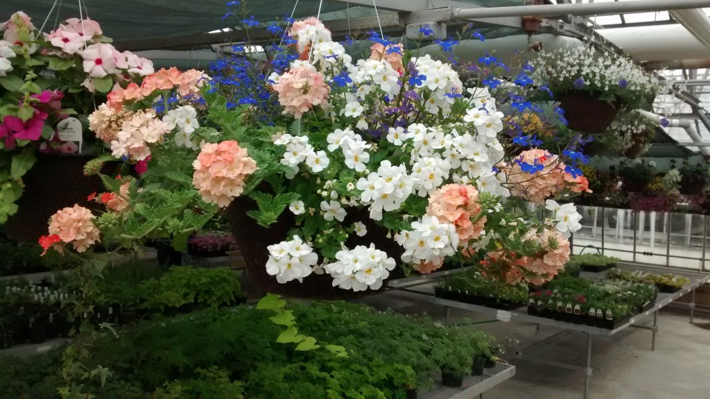 Wide variety of beautiful hanging baskets