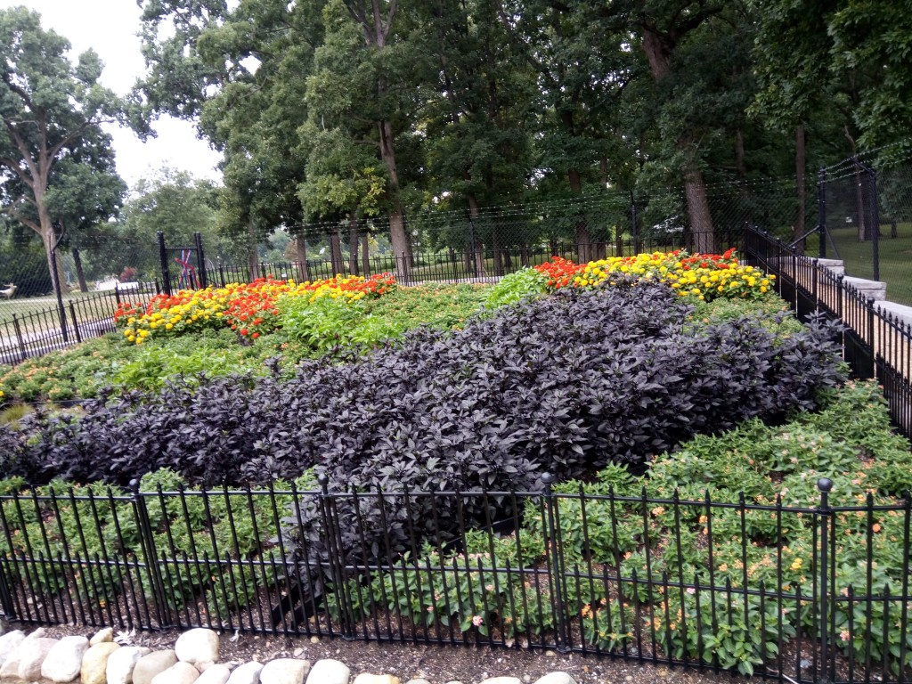 Ornamental peppers provide color for this quilt garden.