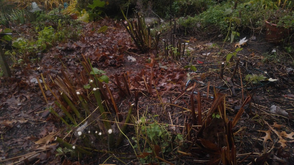 Some gardeners prefer to clear the debris from their garden in the fall.