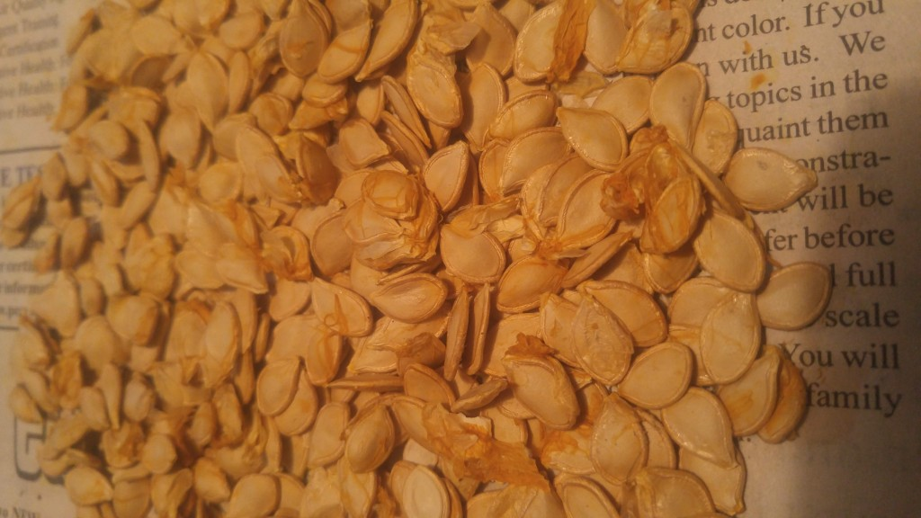 Gourds are filled with seeds and have very little flesh. These are seeds from a single gourd.