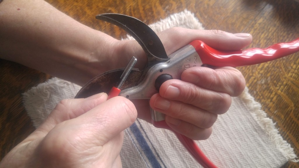 Grasp the pruners like this to avoid contact with the blade while sharpening. This grip also gives you better control of the sharpening tool.