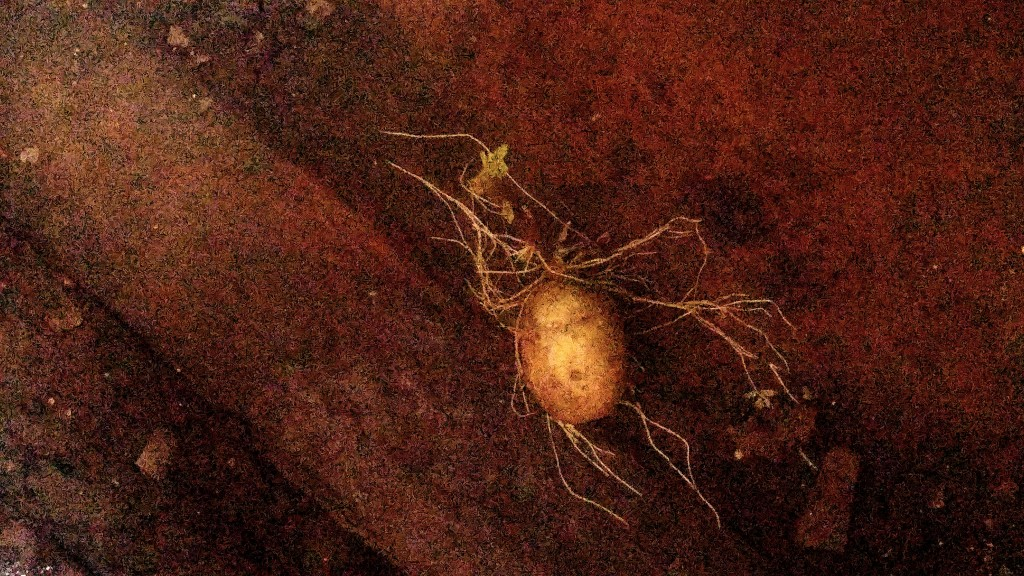 A potato inadvertently became part of the art installation.
